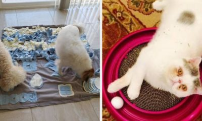 24 Fun Things To Distract Your Pet While You Work From Home