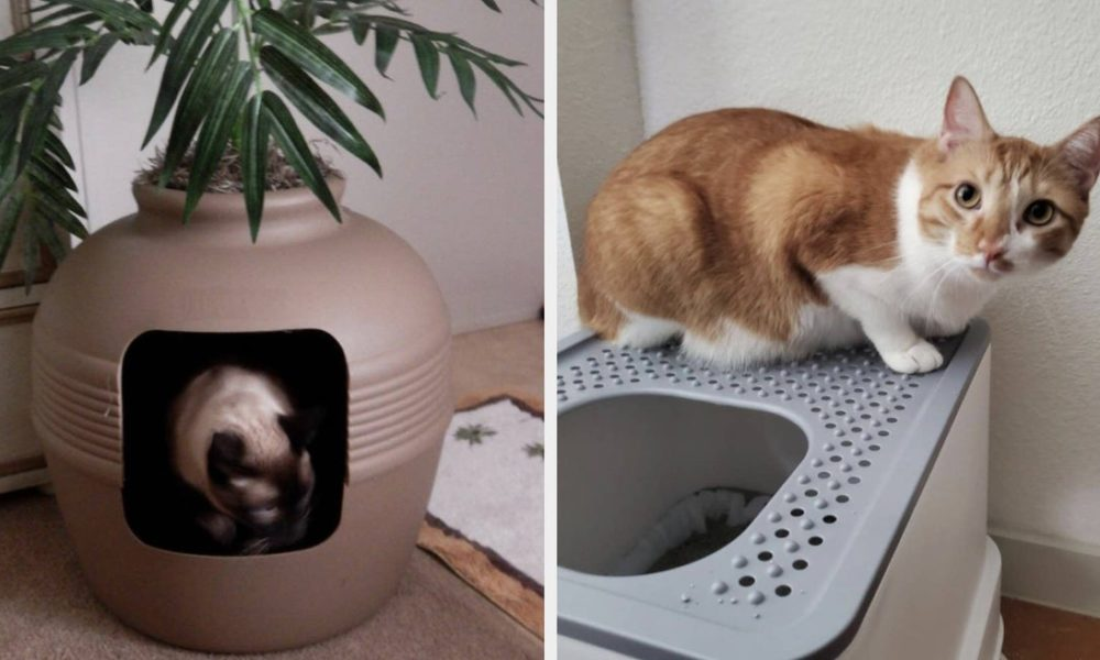 13 Of The Best Litter Boxes You Can Get On Amazon