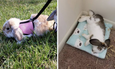 17 Problem-Solving Products For Rabbit Owners You Can Get On Amazon
